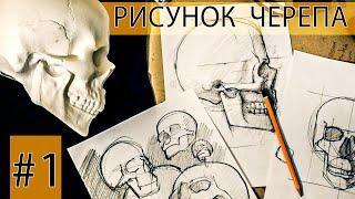 Как рисовать череп? Рисуем по туториалу
